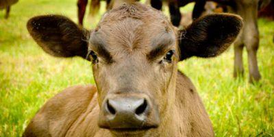 Full Blood Breeding Farms