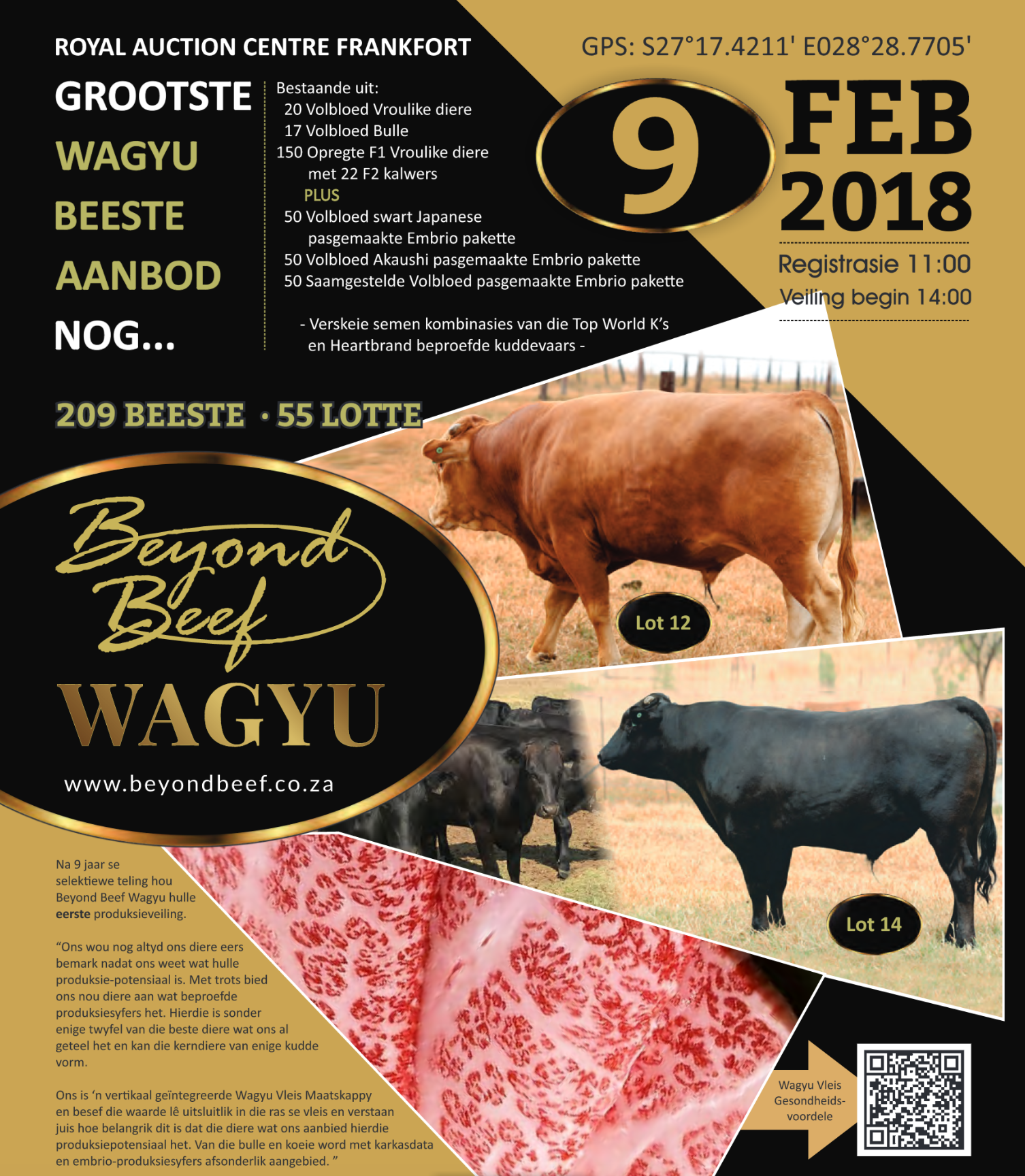 After 9 years of selective breeding – Our Inaugural Production Sale