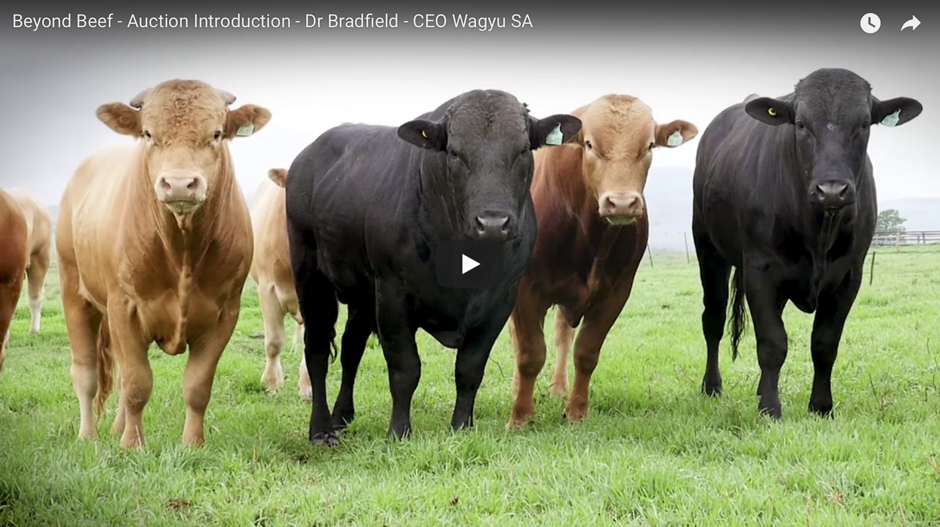 Beyond Beef – Auction Introduction